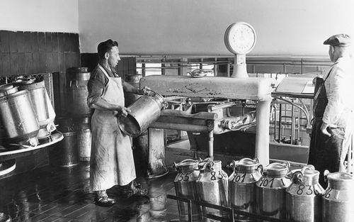 6 Milchannahme 1951