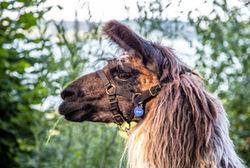 Abenteuer Lama Trekking Effner Img 4177