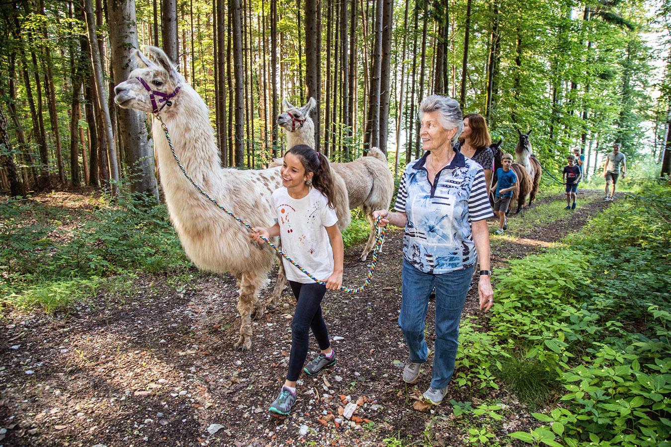 Lama Wanderung am Waginger See, Oberbayern