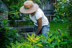 Gartenbaeueringramminger